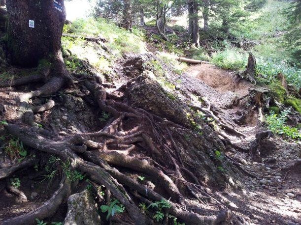 Wanderweg mit Waldpassagen