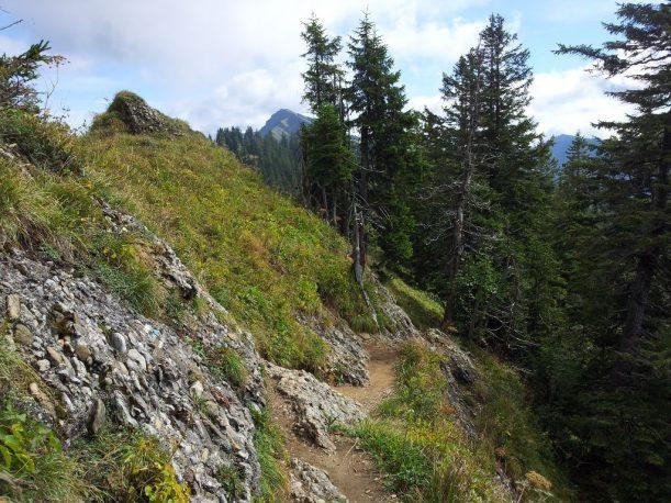 Wanderweg mit Blick zurück auf den Hochgrat