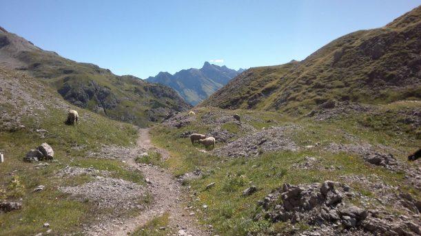 Grenzgänger Schafe mitten in den Bergen