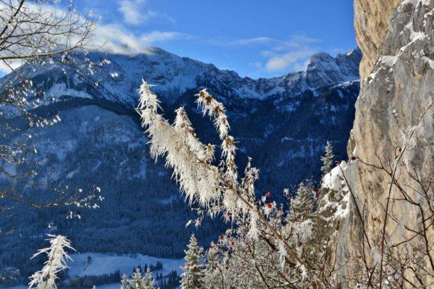 7. Falkenstein Frostblumen an der Mariengrotte Blick Aggenstein