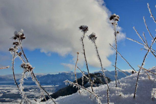 9. Falkenstein Frostblumen an der Ruine