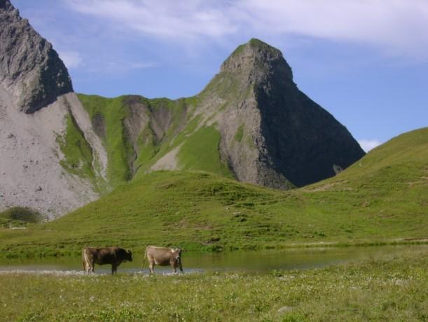 Entlang der Wanderung hatten wir einen Blick auf die Almkühe