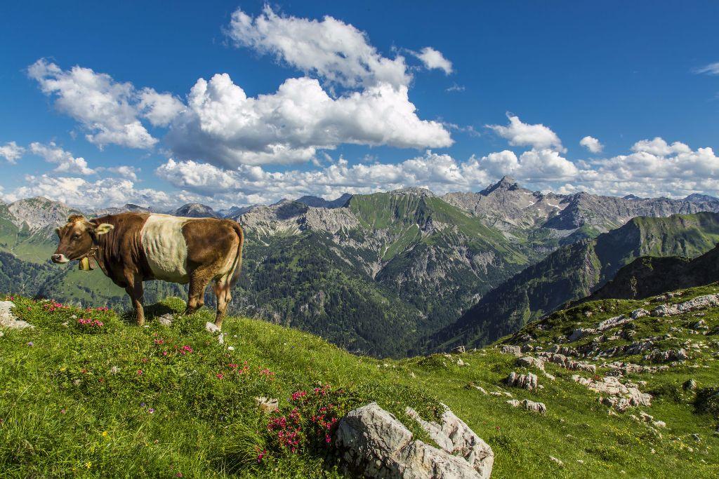 Wandern wie der Prinzregent : Auf der Königsetappe oberhalb von Oberstdorf