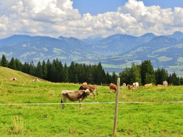 Alpe Fahnengehren - Ausblick