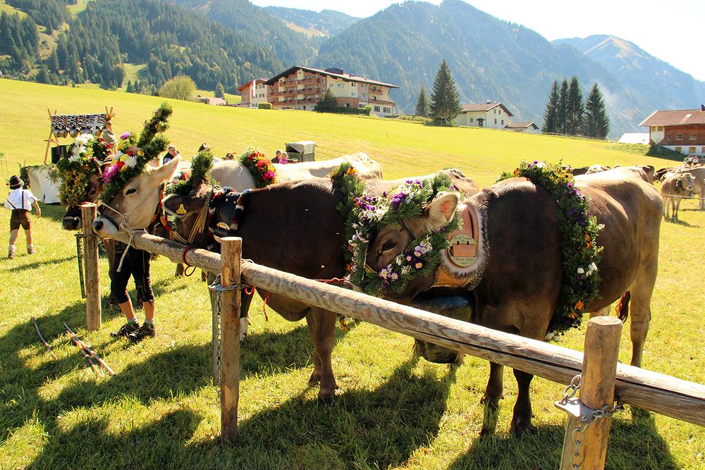 Almabtrieb im Tannheimer Tal, Tirol