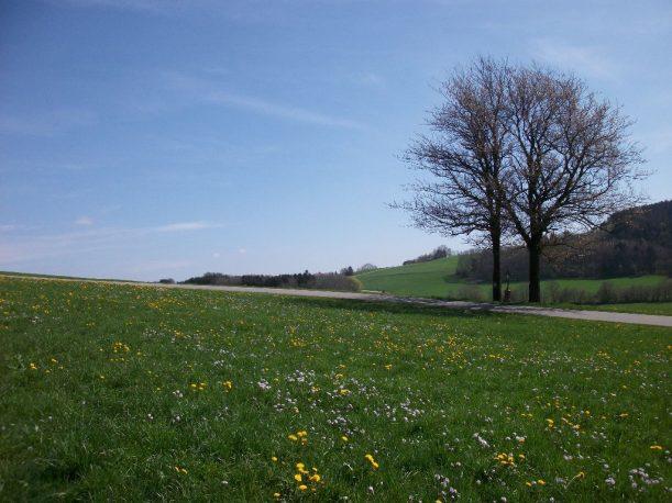 Idyllische Landschaft im Allgäu