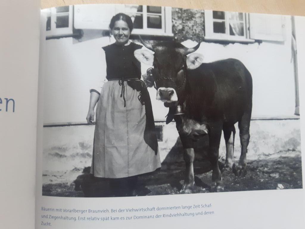 Das Braunvieh im 19. Jahrhundert