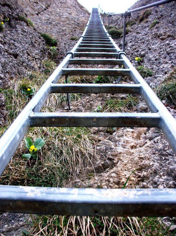 Die Steineberg-Leiter