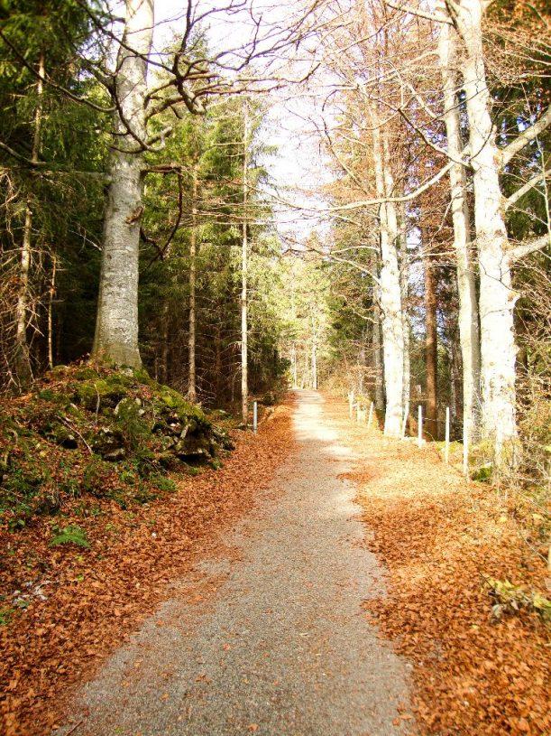 Wanderweg auf den Ornach mit buntem Herbstlaub