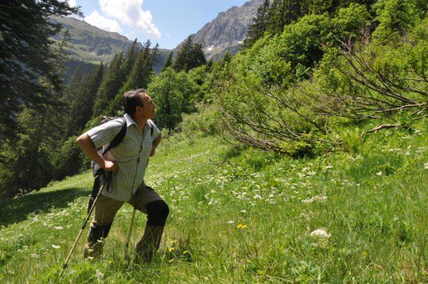 Wandern, Wanderweg, Wanderung, Wanderroute, Bergsteigen