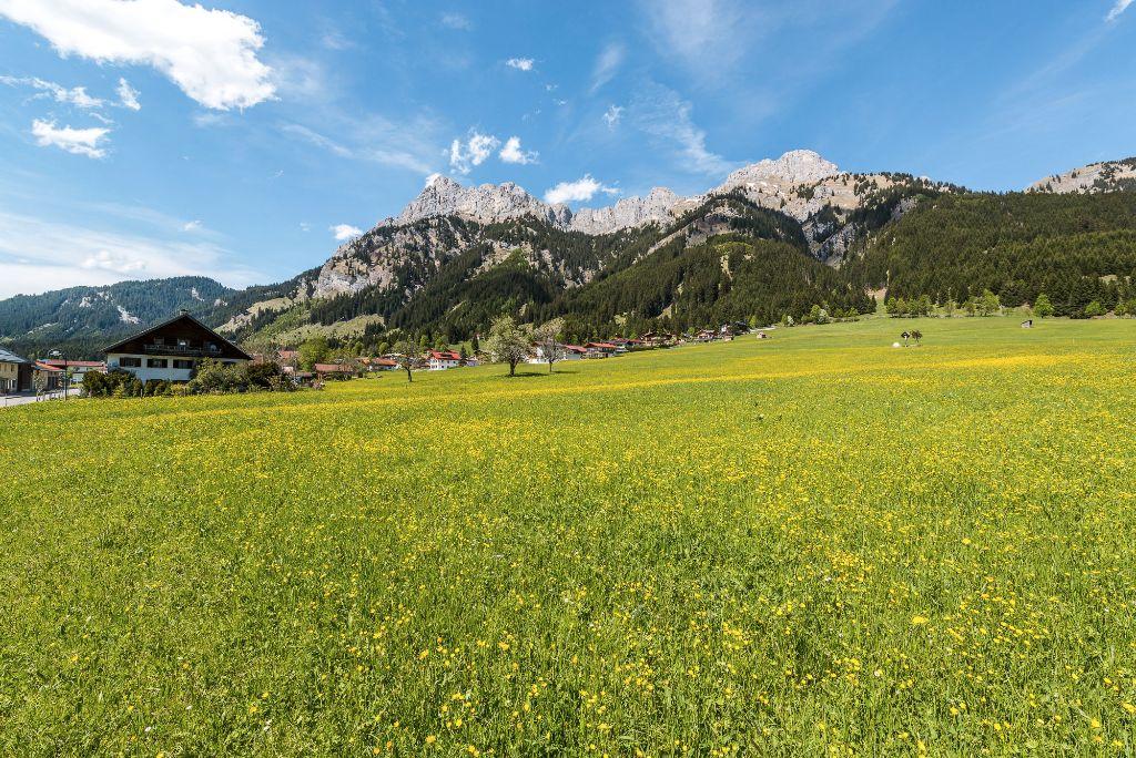 Bunte Blumen im Tannheimer Tal, Tirol