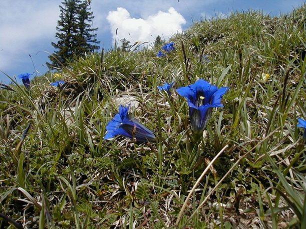 Frühling im Tannheimer Tal