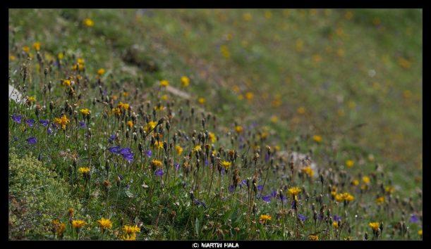 Bunte Blumen auf den Wiesen des Heilbronner Wanderweges