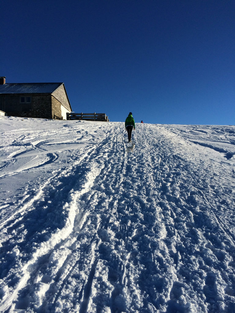 Schneebedeckter Wanderweg am Grünten in den Allgäuer Alpen