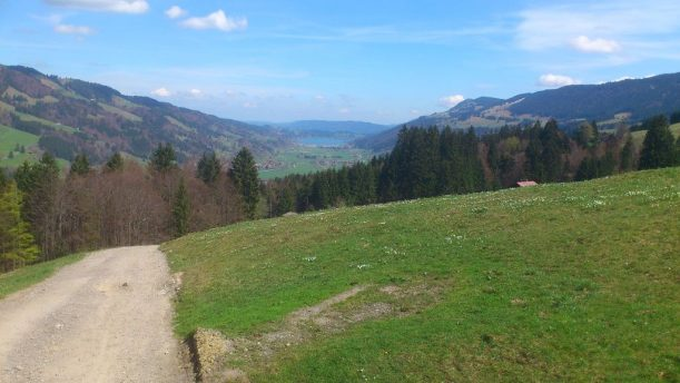 Krokosblüte in den Bayerischen Alpen