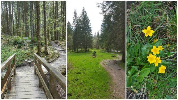 Letzte Wegstrecke der Wanderung über eine Waldlichtung mit Sumpfdotterblumen