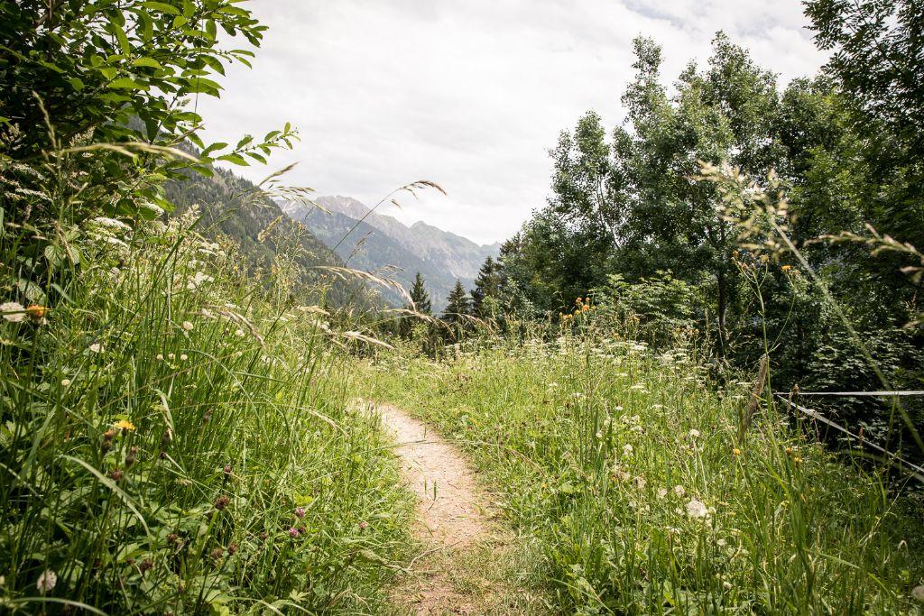 Schöner ursprünglicher Wanderweg zwischen den Wiesen