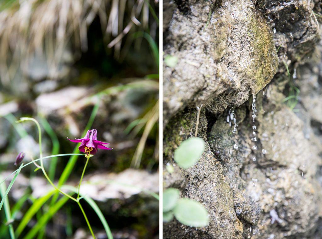 Wilde Orchideen und die ersten Anzeichen des Wasserfalls