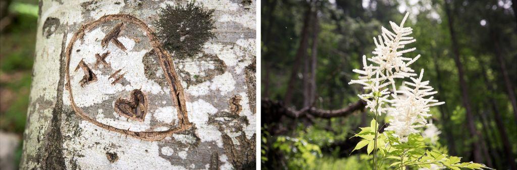 Liebesbekundungen in Bäume eingeritzt