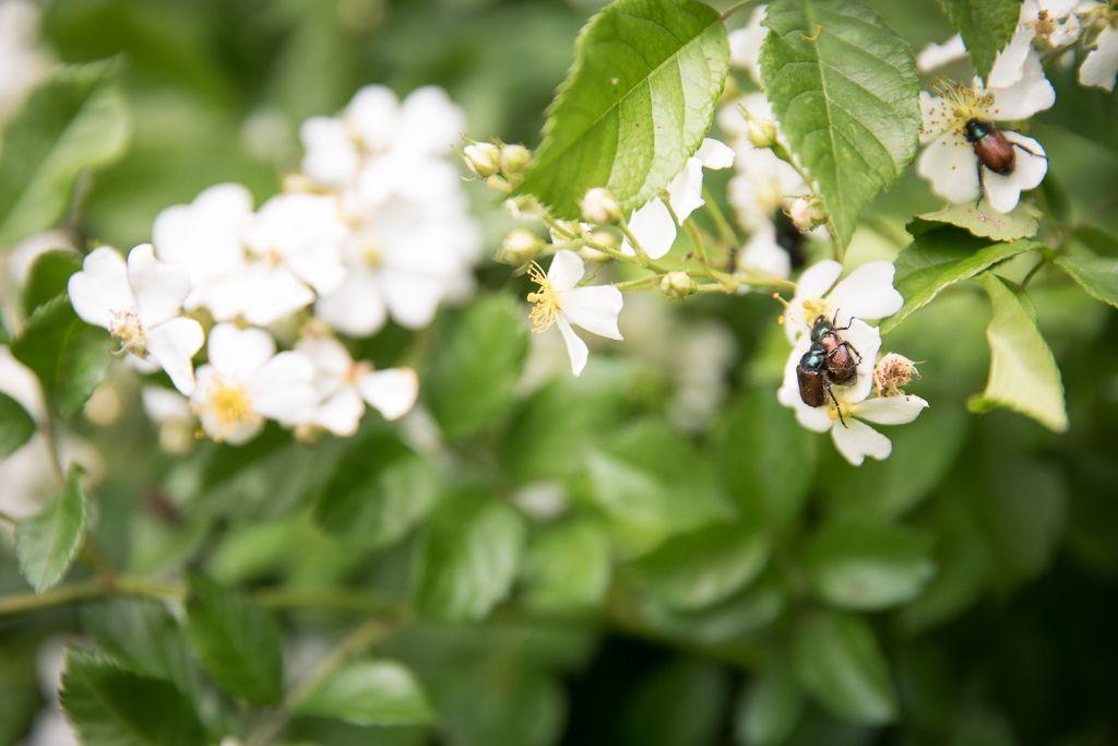 Blumen und kleine Insekten gibt es am Wegesrand zu entdecken