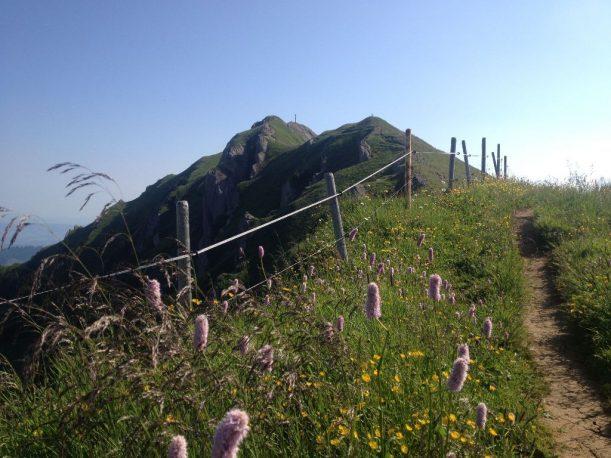Allgäuer Gipfel: das Rindalphorn der Nagelfluhkette