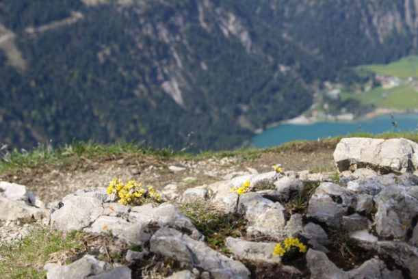 Rothe Flüh Gipfel Blick auf den Haldensee