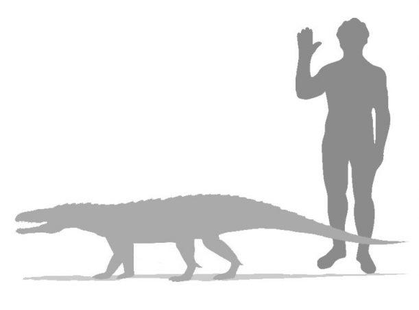 Ticinosuchus_Ferox_Größenvergleich
