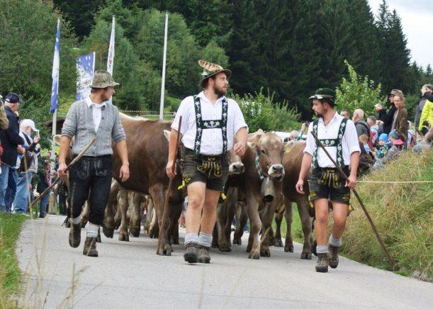 Jede Herde wird von ihren Hirten angeführt - sie verbrachten ebenfalls den Sommer auf der Alpe