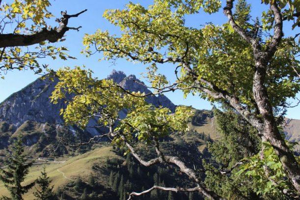 Wanderung auf die KrinnenspitzeTirol