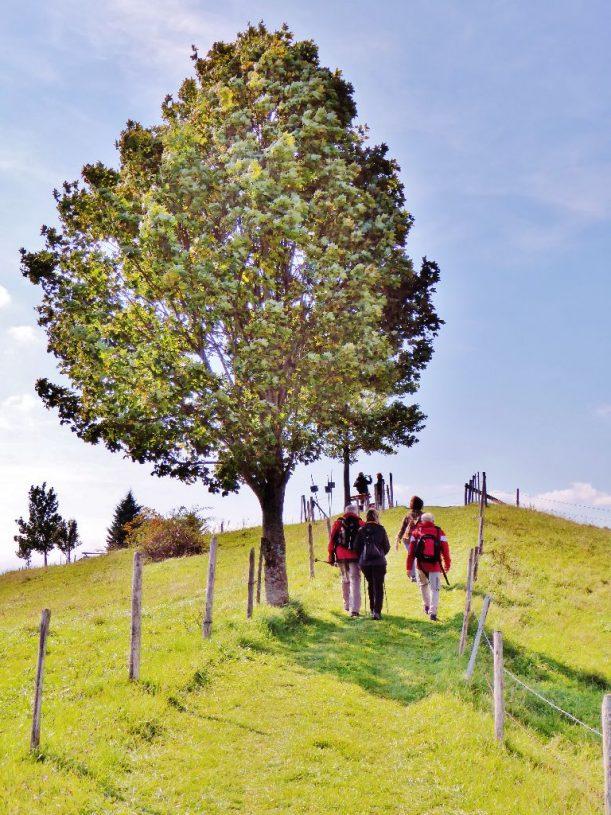 Roderbühl bei Scheidegg