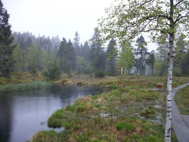 Das Wildrosenmoos im Naturschutzgebiet Hochmoor im Allgäu