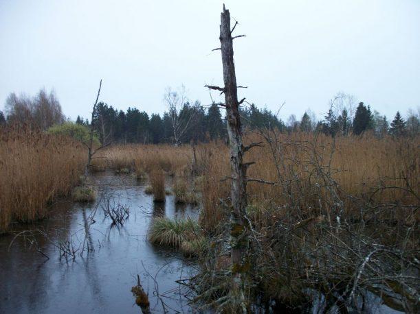 Wandern auf der Wiesengängerroute von Bad Wurzach nah Kißlegg